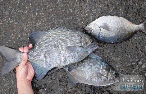 安抚一下鱼群