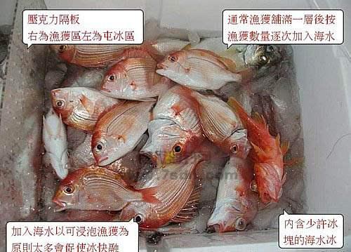 船钓深海鱼保鲜方法