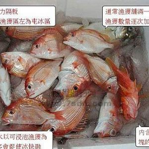 船钓深海鱼的正确保鲜方法