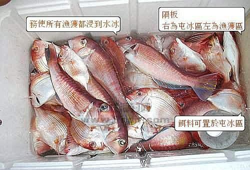 船钓深海鱼保鲜方法,浸掉冰里