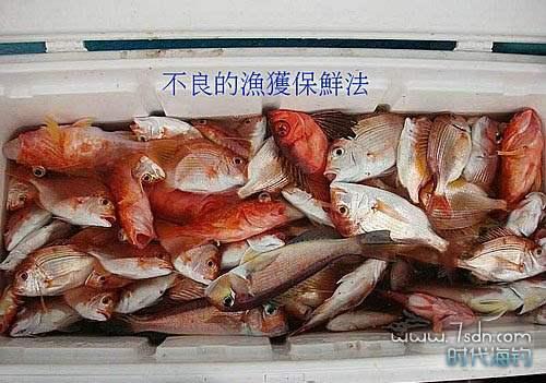 船钓深海鱼保鲜方法 不良保鲜方法