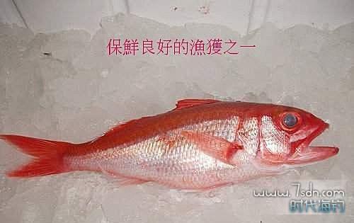 船钓深海鱼保鲜方法 良好方法