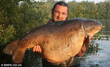 """重量级28公斤""""胖妇人""""淡水鱼去世"""