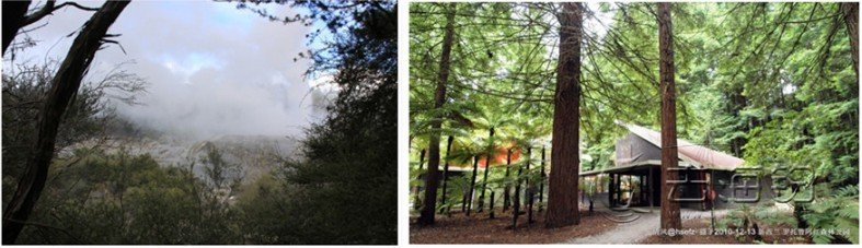 罗托鲁亚红木森林