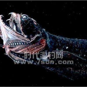 全球最恐怖还是最好看的?十大海洋恶魔鱼