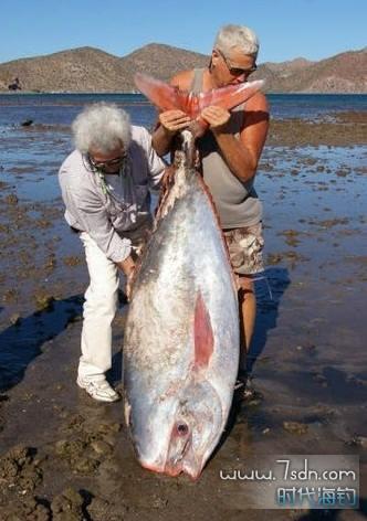 海洋特殊鱼类系列 - 鯕鲭